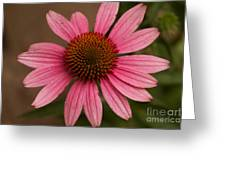 The Pink Daisy Greeting Card