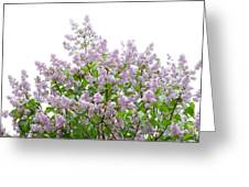 The Pink Of Spring - Featured 2 Greeting Card