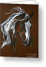 The Pinto Horse Greeting Card