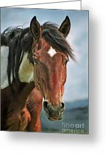 The Pinto Horse Portrait Greeting Card