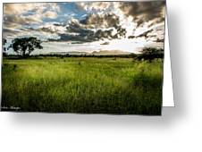 The Plains Of Africa Greeting Card