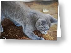 The Playful Kitten Greeting Card