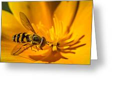 The Pollen Hunter Greeting Card