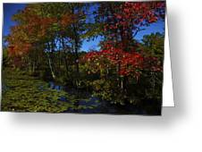 The Pond In Autumn Greeting Card