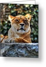 The Pondering Lioness Greeting Card