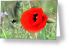 The Poppy And The Bee Greeting Card