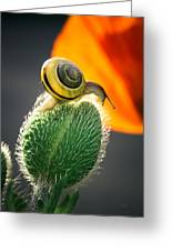 The Poppy And The Snail Greeting Card