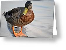 The Posing Duck Greeting Card