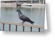 The Posing Pigeon Greeting Card