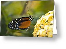 The Postman Butterfly  Greeting Card