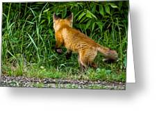 The Pounce Greeting Card
