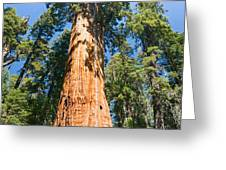 The President - Very Large And Old Sequoia Tree At Sequoia National Park. Greeting Card