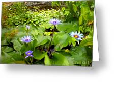 The Pretty Pond And Perfect Petals Greeting Card