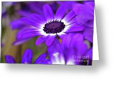 The Purple Daisy Greeting Card