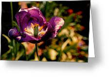 The Purple Rose Of Cairo Greeting Card