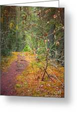 The Quiet Path Greeting Card