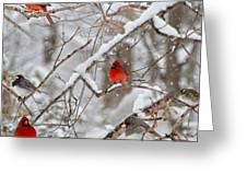The Quiet Within The Forest Greeting Card