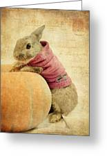 The Rabbit And The Pumpkin Greeting Card