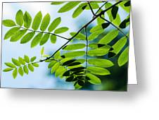 The Rain Has Stopped Greeting Card