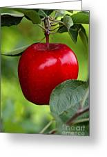 The Red Apple Greeting Card