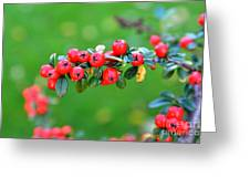 The Red Berries Greeting Card by Aqil Jannaty