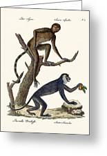 The Red Howler Monkey Greeting Card