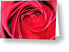 The Red Rose Blooming Greeting Card