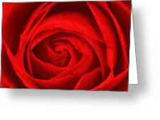 The Red Rose Greeting Card
