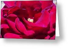 The Red Velvet Rose Greeting Card by Jan Moore