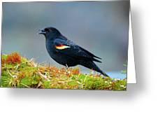 The Red-winged Blackbird (agelaius Greeting Card