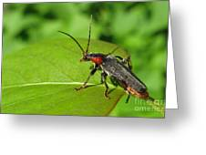 The Rednecked Bug- Close Up Greeting Card