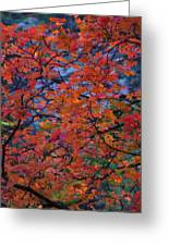 The Reds Of Autumn  Greeting Card