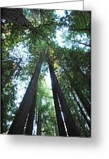 The Redwood Giants Greeting Card