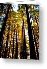 The Redwoods Of Florence Keller Park Greeting Card