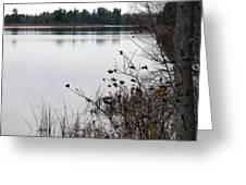 The Remnants Of Fall Greeting Card by Rhonda Humphreys