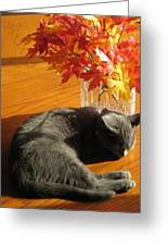 The Restful Leaves If Fall Greeting Card