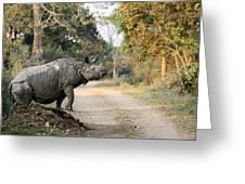 The Rhino At Kaziranga Greeting Card