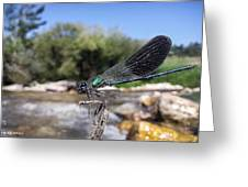 The River Dragonfly Greeting Card