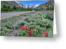 The Road Into Lundy Canyon Greeting Card