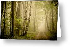 The Road Through The Woods Greeting Card