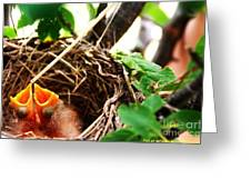The Robins Nest Greeting Card