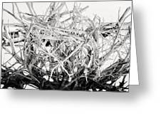 The Roots In Black And White Greeting Card by Lisa Russo