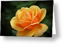 The Rose 1 Greeting Card