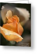 The Rose Bud Greeting Card