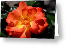 The Rose Of Joy Greeting Card