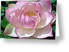 The Sacred Lotus  Greeting Card