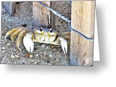 The Sandcrab - Seeking Shelter Greeting Card