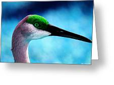 The Sandhilll Crane  Greeting Card