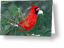 The Santa Bird Greeting Card