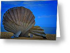 The Scallop Greeting Card